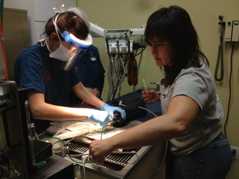 Gale restrains Nico while Dr Wynn does her dental work