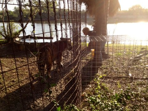 Keepers greeted by tiger chuffs and sunrise over the lake