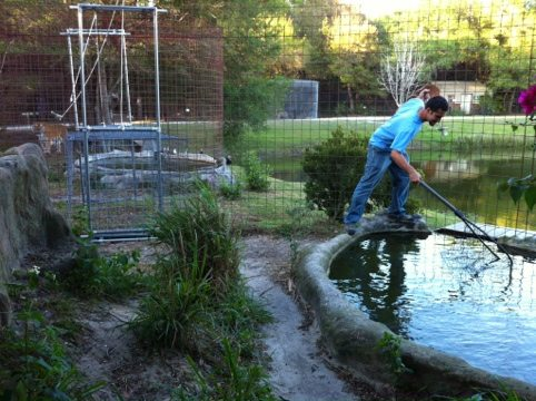 Dr Justin Boorstein rescues a fish