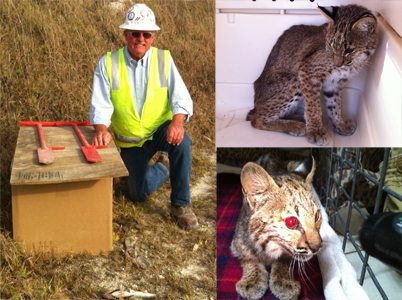 Tommie the bobcat's rescuer Tommie Deaner