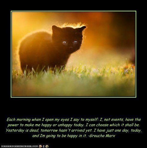 Gallery For gt Inspirational Cat Funny