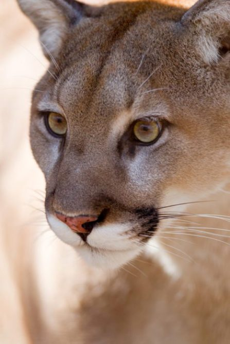 "little river cougars dating site ""cougar"" referring to an older woman who is on the prowl for river house acres skip to content especially in the dating world and in the sack."