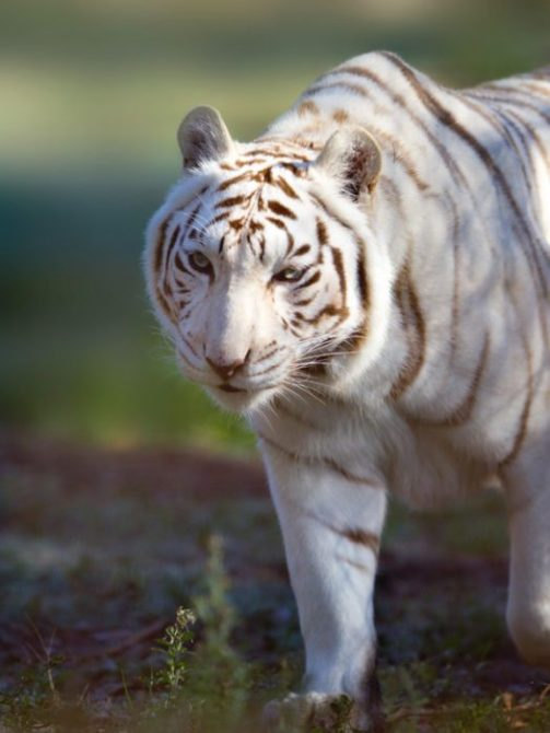 Neighbors Sue Tiger Haven for noise level odor waste and water runoff