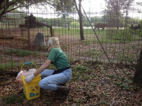 Green Level Keeper Marie Cleaning the Tigers at Big Cat Rescue