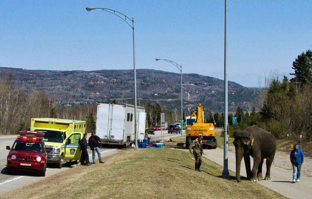 Tigers and Elephant Survive Circus Wagon Fire