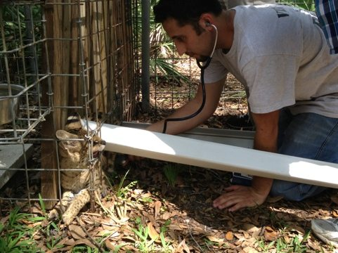 Dr Justin Boorstein listens to Cybil Serval's heart