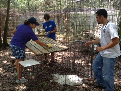 Intern Arnaud assists President Jamie Veronica w/ Tonga the White Serval