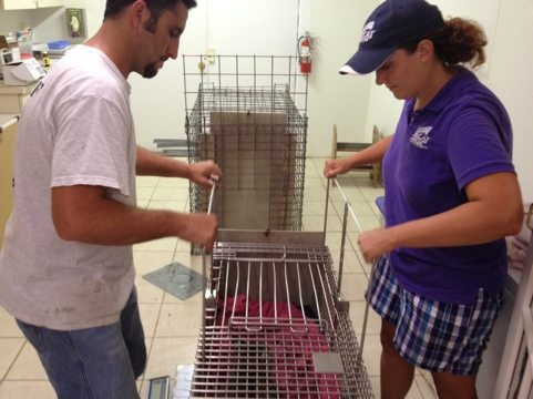 Dr Boorstein and Jamie Veronica squeeze Tommie Girl bobcat for final vaccines