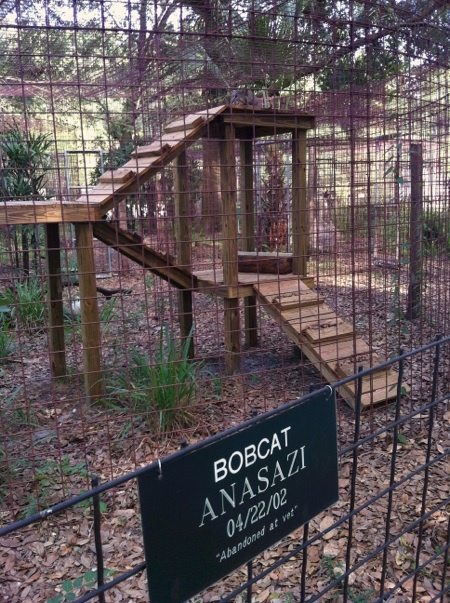 Bobcat atop jungle gym built by volunteer husband and wife; the Holleys