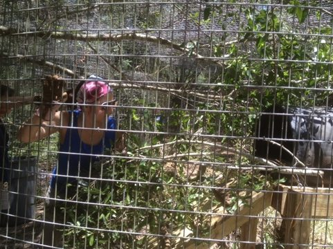 Canyon being seen by vet, so volunteers overhaul cage