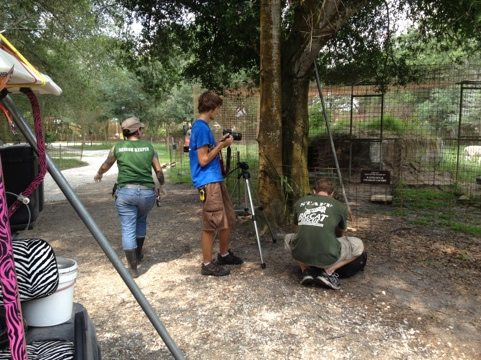 Volunteers and Interns filming our next fun video of lions and tigers