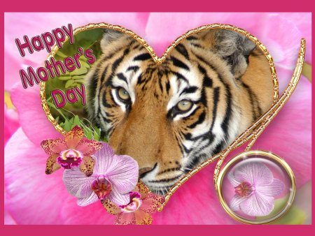 Happy Mothers Day Tiger 2012