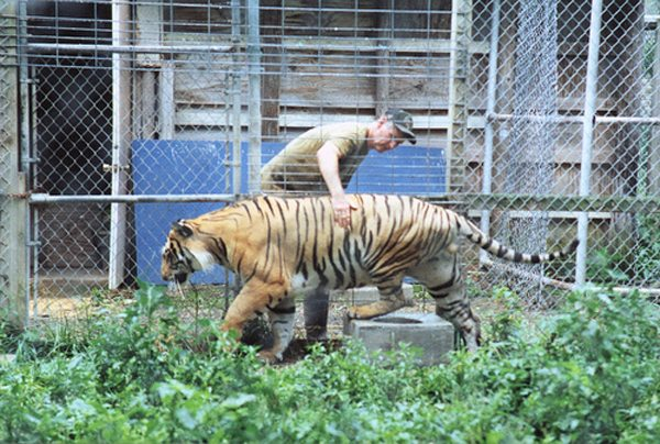 Where can I pet a lion? | Big Cat Rescue