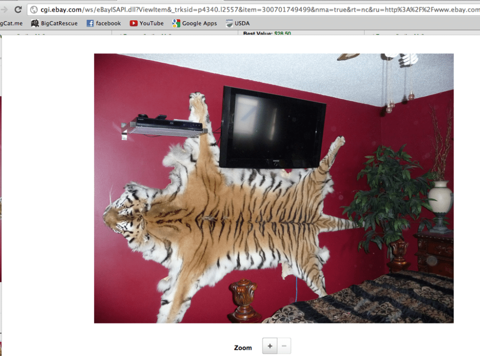 Tiger Skin and Tiger Bones Openly Traded on eBay in 2012