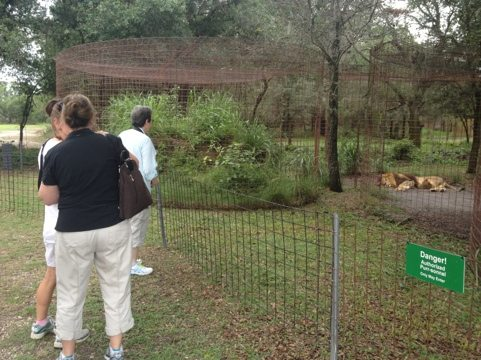 Marie Collart and friends visit Joseph and Sasha the lions