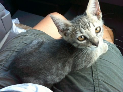 This rescued bobtailed kitten has the most soulful eyes!