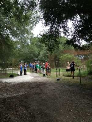 Volunteers and Interns throwing enrichment to big cats