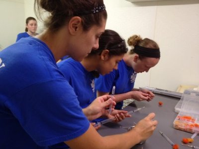 Big Cat Rescue Interns learn how to use sedation equipment