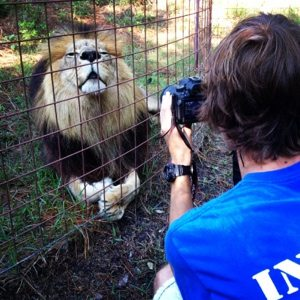 Intern Arno works w/ videographer Chris Poole and a proud lion on the purrfect shot