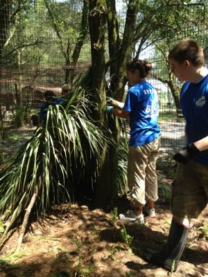 Volunteers will make tiki huts for some of the cats from fronds
