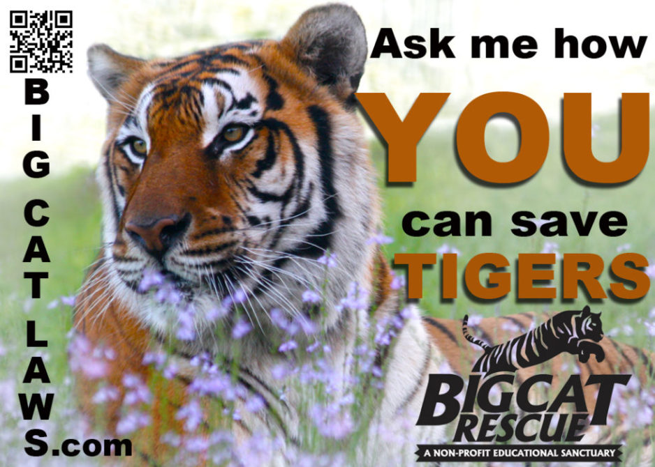 Today at Big Cat Rescue June 27