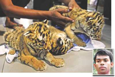 Sunderban Tiger Cubs Smuggled 2012
