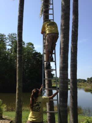 Tree trimming is an ongoing project