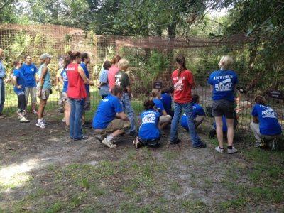Volunteers watch Nikita lioness get a watermelon treat