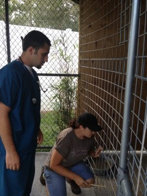Dr. Boorstein and Jamie Veronica check to see if cougar is asleep