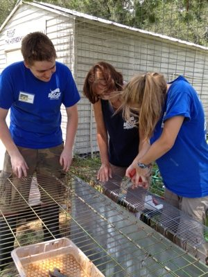 Interns revamp a hospital cage for Gator the baby bobcat