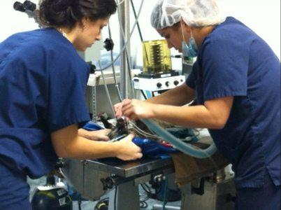 Dr Miller does repair to Calvin the civet's eye
