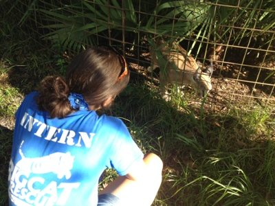 Intern visits with a caracal
