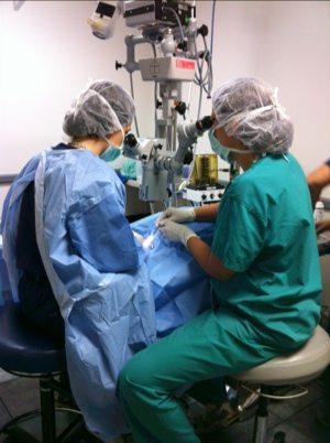 Dr Miller saves Calvin the civet's eye