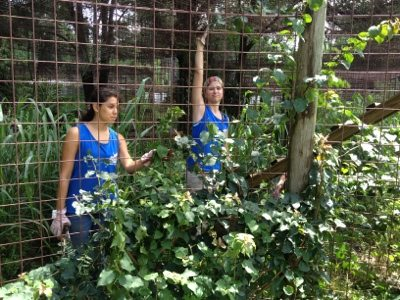 Interns trim away some of the foliage so the guests can see the cats too