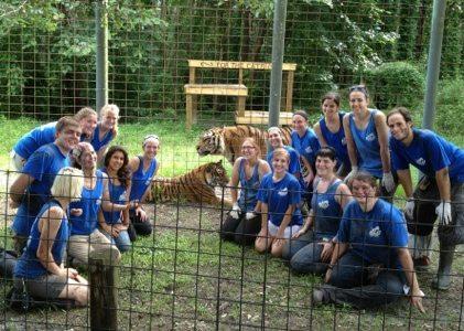 Hard work but plenty of rewarding chuffs from tigers at BCR