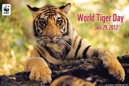Today at Big Cat Rescue July 29 World Tiger Day