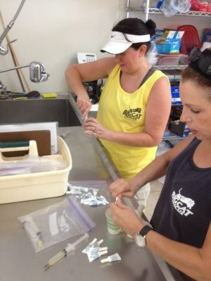 Barbara and Kathryn get flea meds ready to treat the big cats