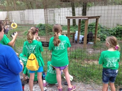 Sabre the black leopard gets an elephant from Summer Campers