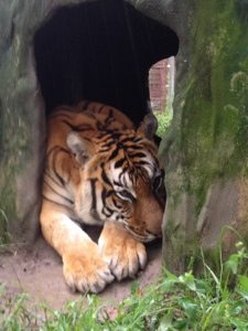 "Flavio Tiger asks, ""Is Isaac gone yet?"""