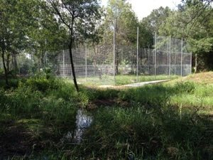 Nikita Lioness cage goes up in between rain showers