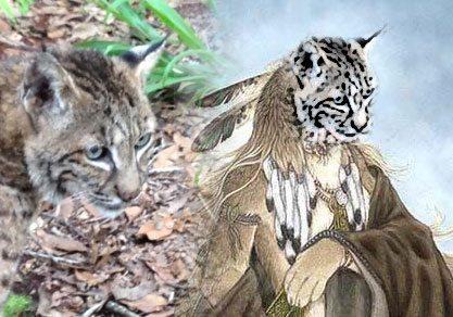 Indian Summer Bobcat 1989-2012