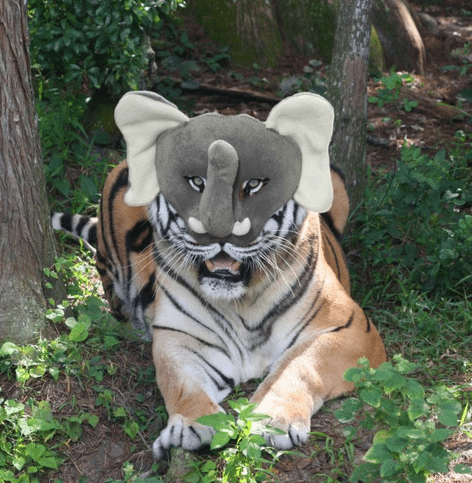 This RNC Tampa Tiger is courtesy of Photo Shop