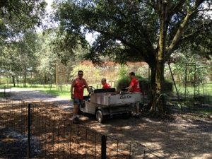 Volunteers put their muscles to use mulching the tour path