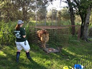 Maureen feeding Joseph Lion at BCR