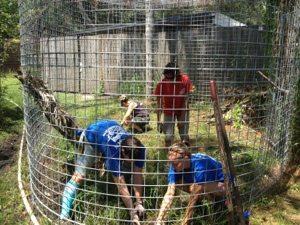 Volunteers pull weeds in Windstar Bobcat's home