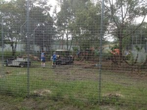 Interns and Volunteers clear vines and weeds from lion cat-a-tat
