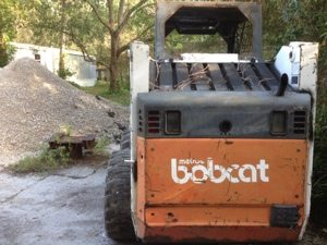 More than one kind of bobcat at Big Cat Rescue