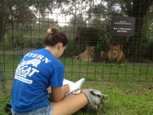 Intern Heather drawing Joseph and Sasha lions