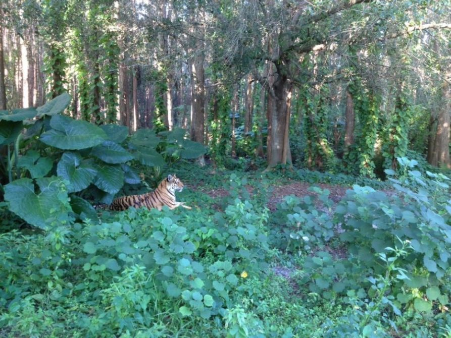 Today at Big Cat Rescue Sept 12 iPhone 5 Announced