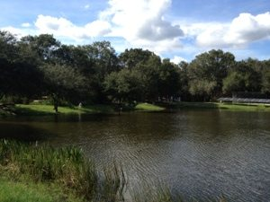 Tiger ponds on lakeside at Big Cat Rescue